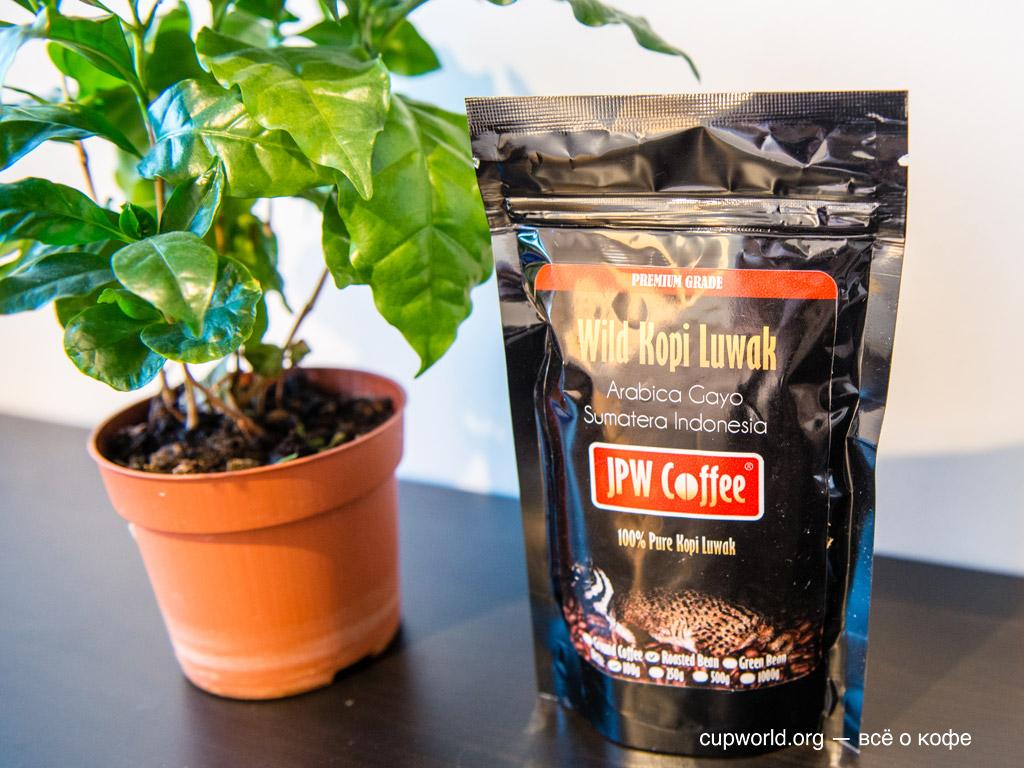 Моё кофейное дерево и кофе Лювак